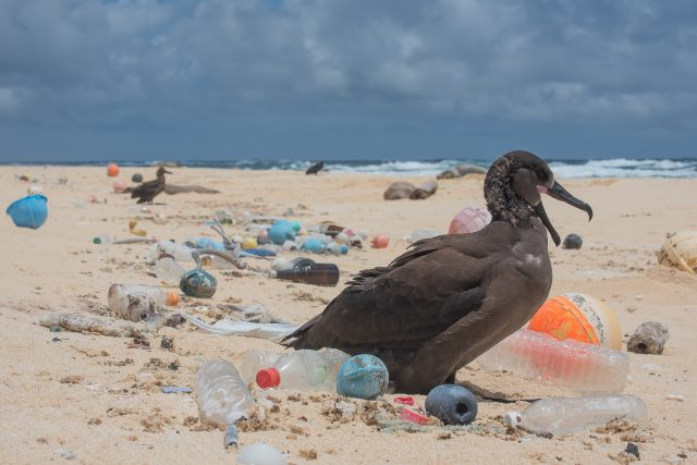 Bird-surrounded-by-plastic-photo-by-Matthew_Chauvin-640x427.jpg