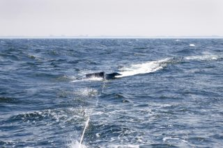 Manta trawl deployed during Mega Expedition.