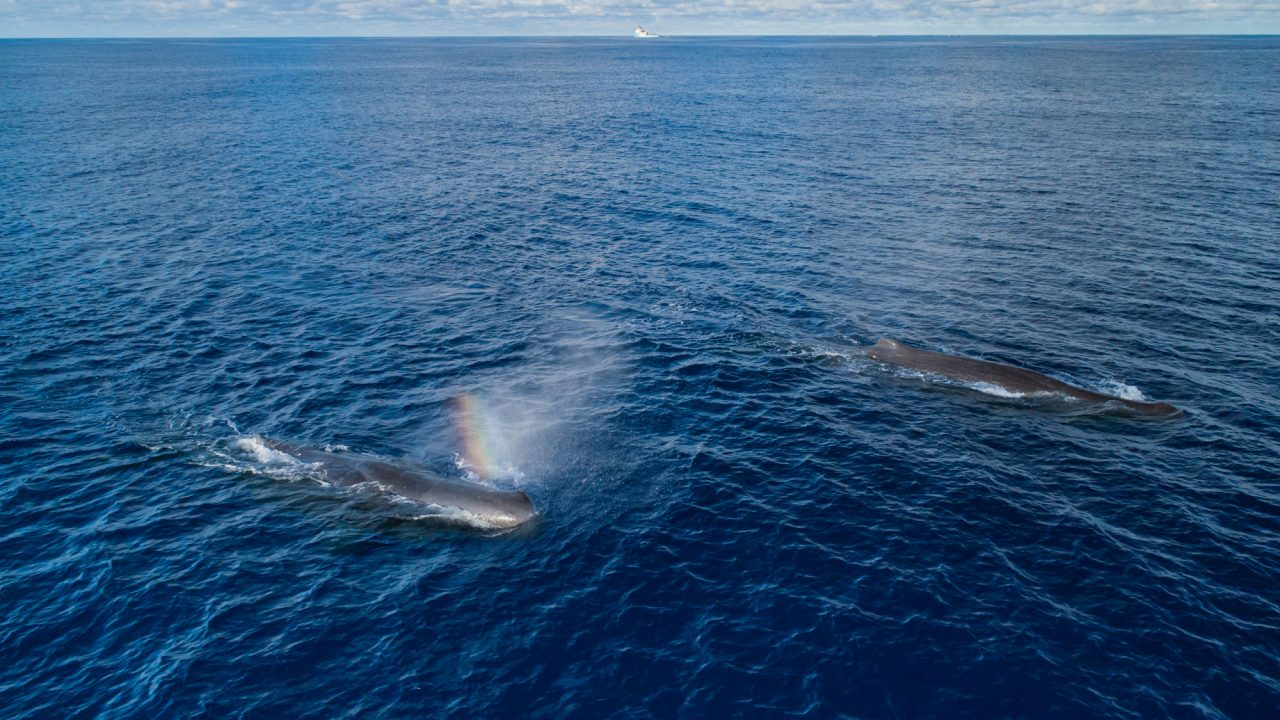 Sperm whale mother and calf. Observed on System 001's first mission.