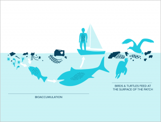 How plastic pollution travels up the food chain